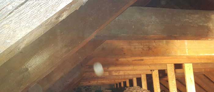 Woodworm Archives Mcknight Building Preservation