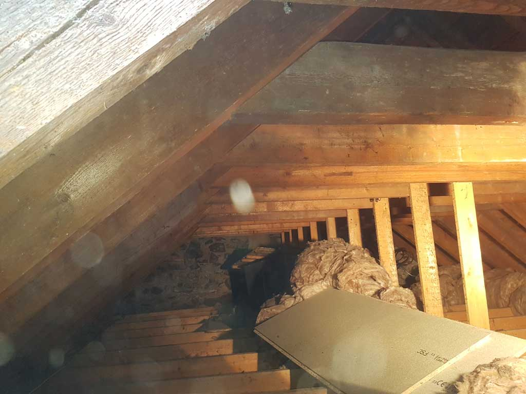 roof void with woodworm