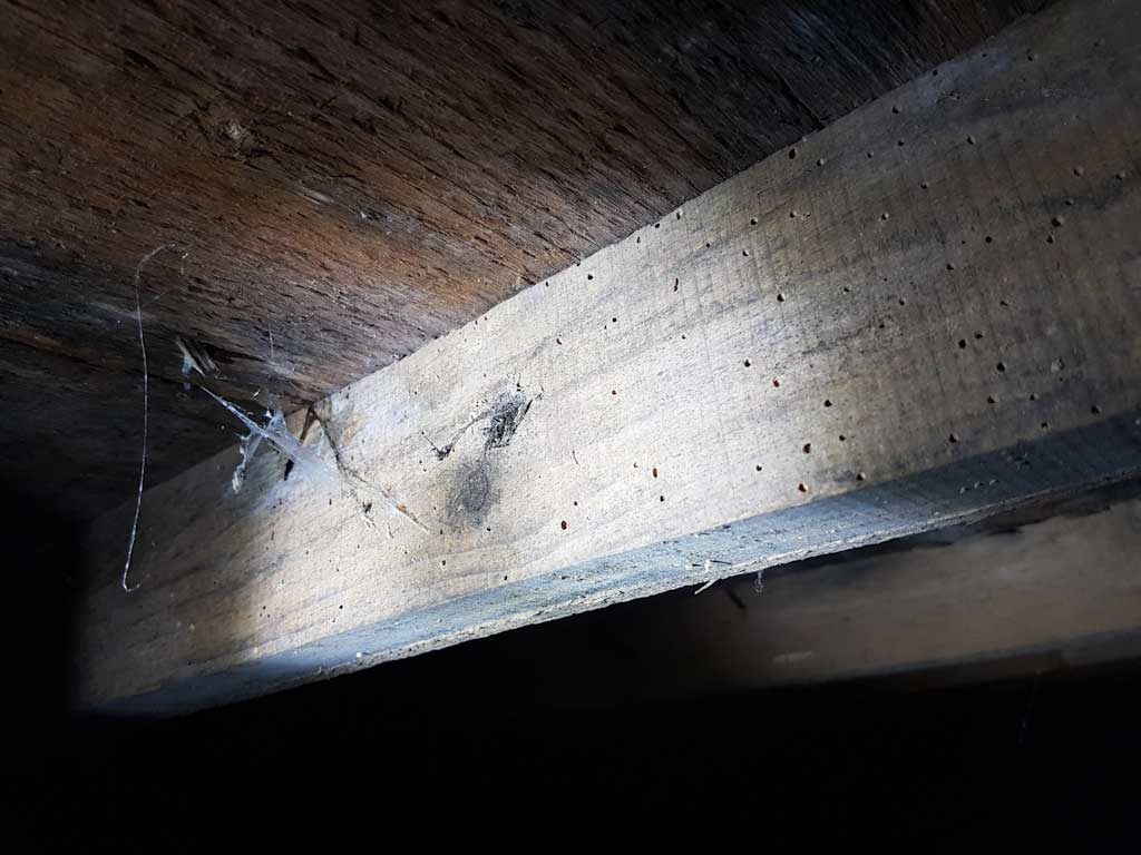 Woodworm in rafters