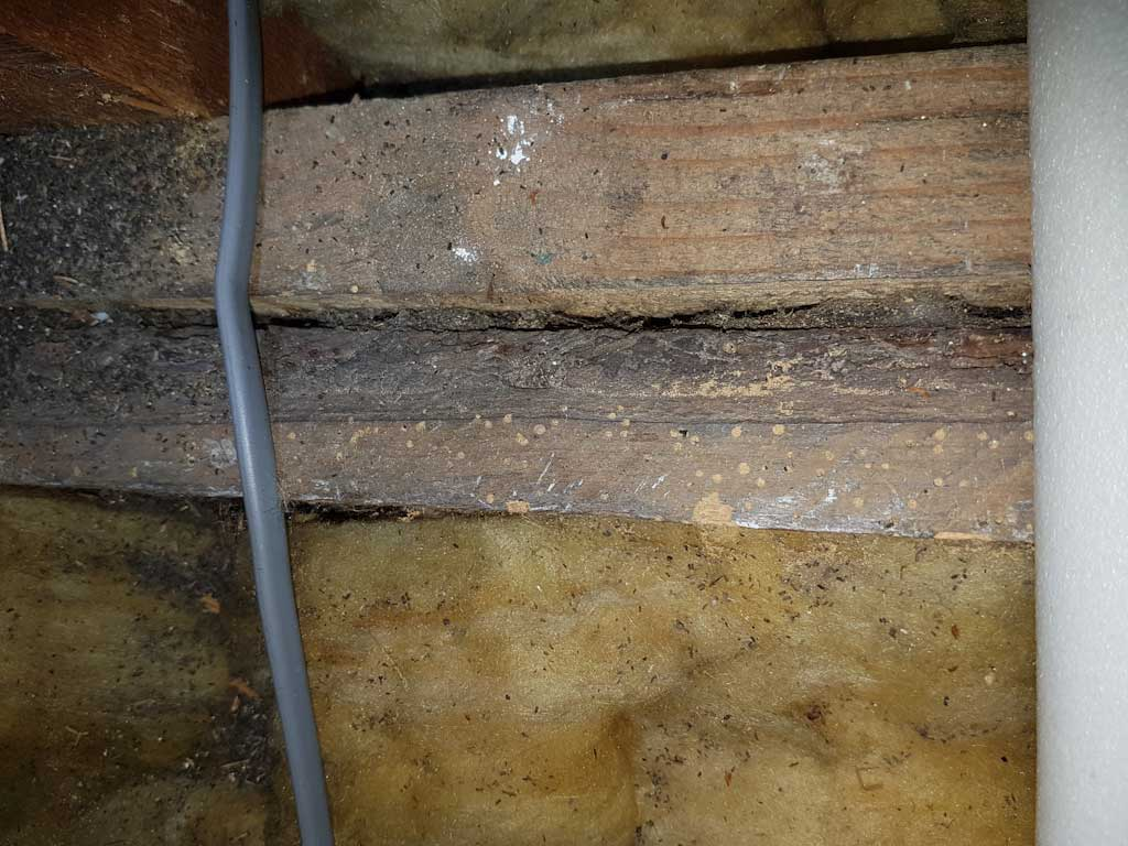 Woodworm in roof joists