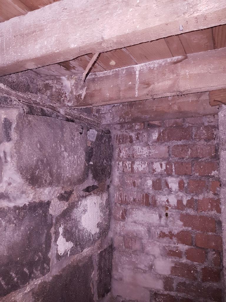 solum dry rot